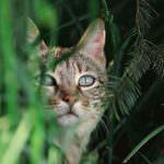 wild-cats11