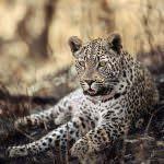 wild-cats8